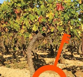 Adresses Clés des vins