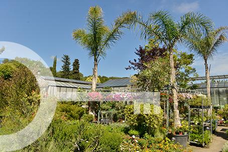 Jardinerie Le Jardin d'Antoinette à Bandol